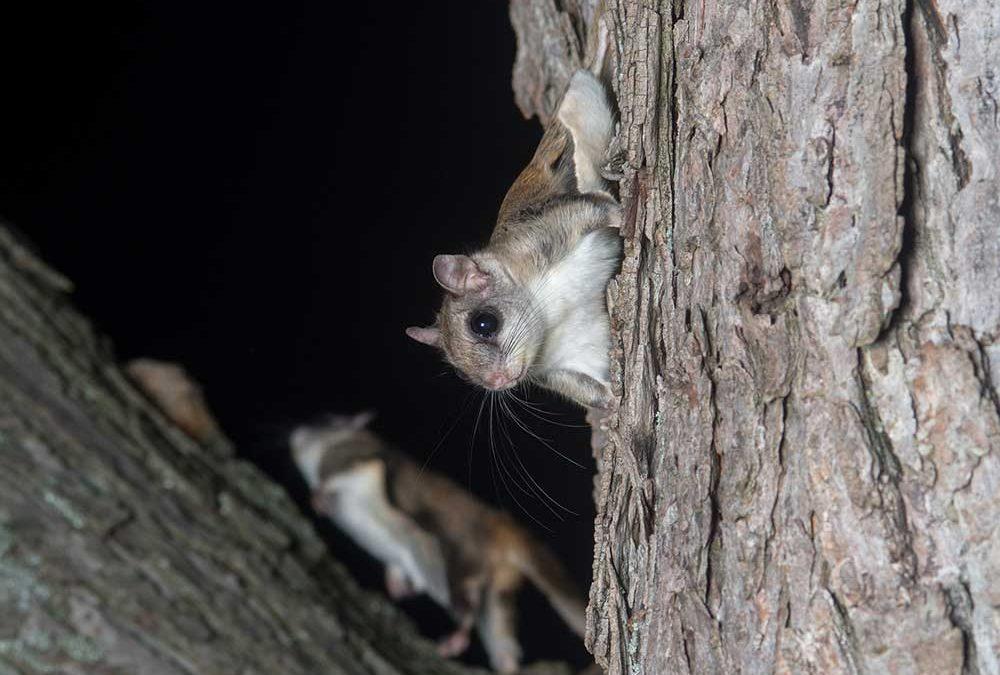 Squirrel Removal Westport CT