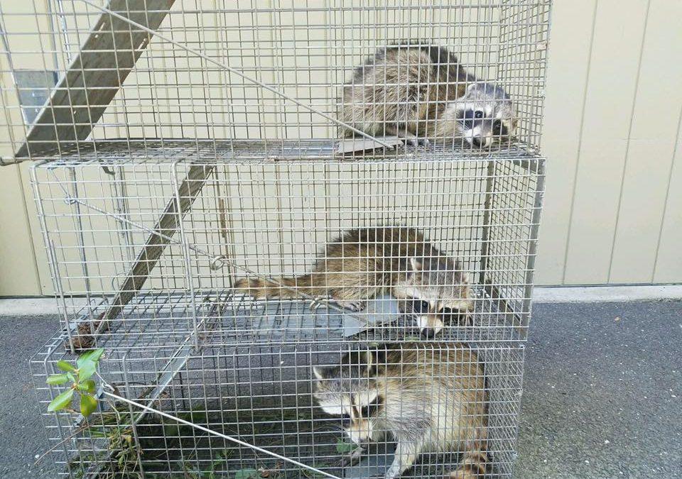 Animal Removal Westport