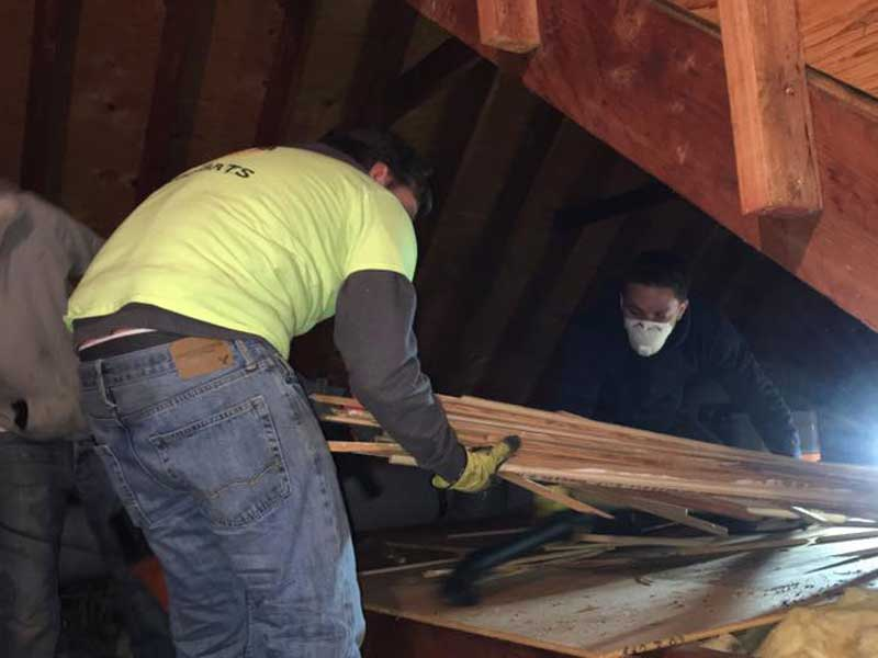 Remove Destroyed & Contaminated Insulation and we apply Decontamination Solutions In The Attic.