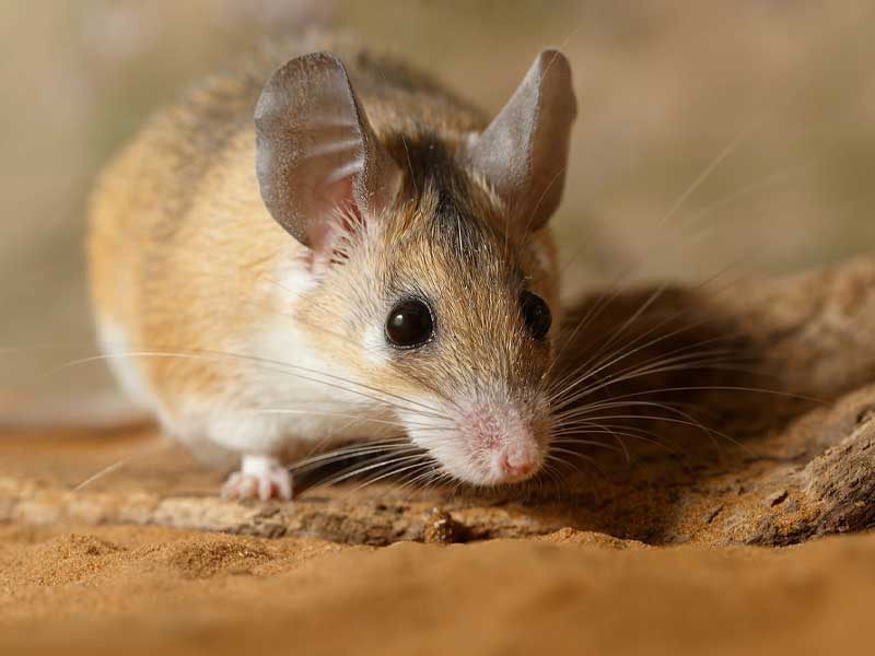 Westport Wildlife Control Experts mice rat stations get rid of your mice rat problems.