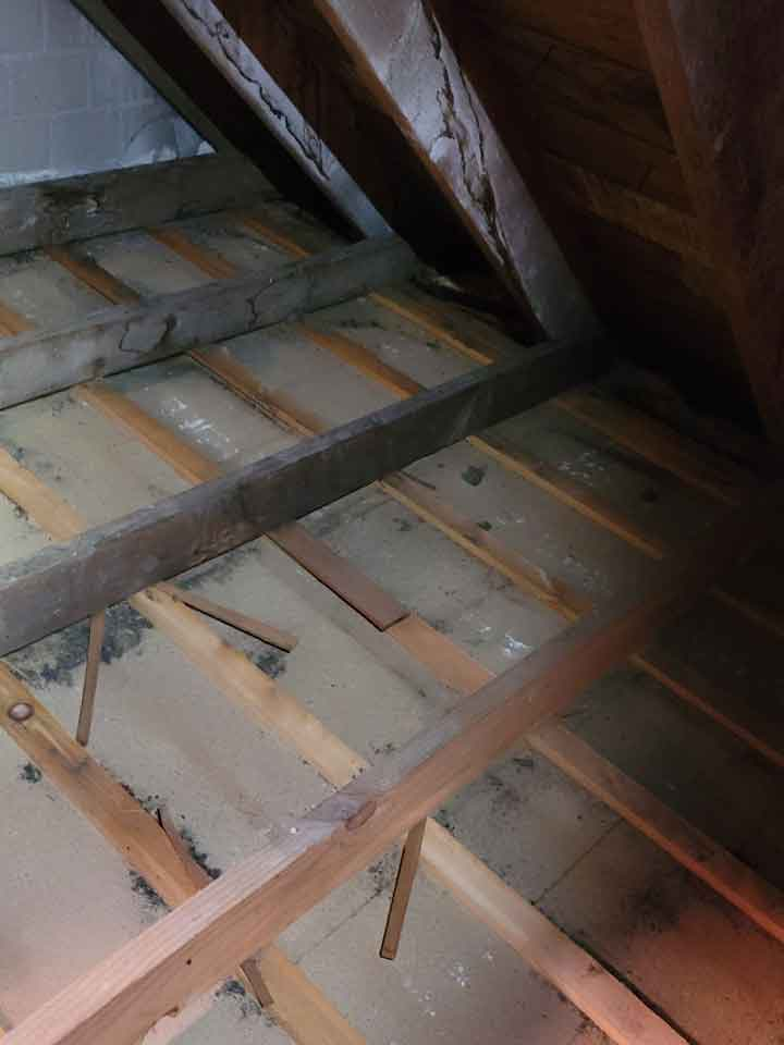 Once we have removed wildlife from an attic the next step is cleanup and decontamination. Here is a spotless  clean smelling attic ready for new insulation.