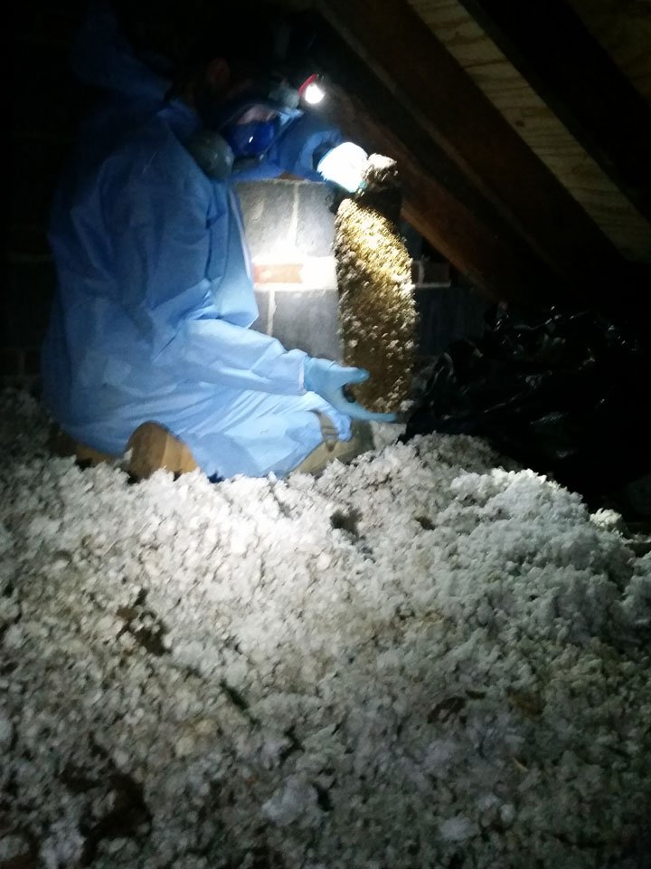 An example of one of out Westport wildlife control experts examining the mess a raccoon created.