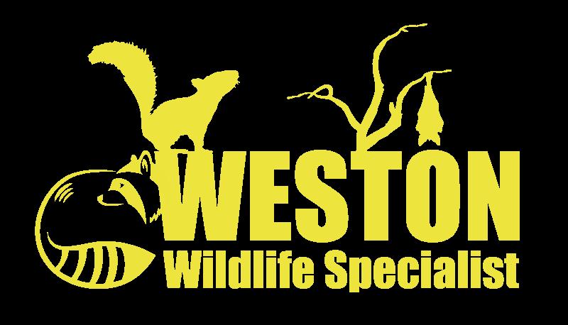 Digital Banner for Weston Wildlife Specialist